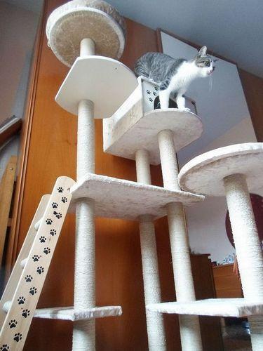 Домик для кошки своими руками: фото, чертежи, схемы, видео
