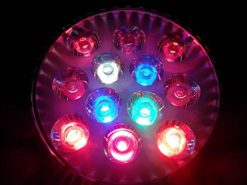 Фитолампы светодиодные: разновидности и использование