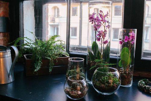 Флорариум своими руками для начинающих: фото, видео примеров