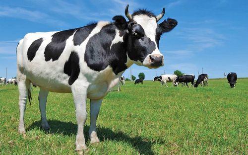 Хвощ полевой: лечебные свойства и противопоказания