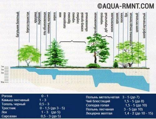 Как найти воду для колодца - несколько проверенных методов поиска воды