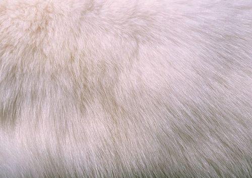 Как покрасить натуральный мех в домашних условиях, фото примеры