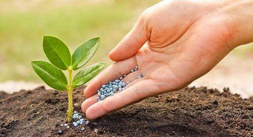 Какие удобрения нужны весной для огорода для хорошего урожая