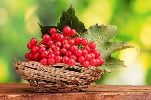 Калина красная: рецепты на зиму, заготовки калины