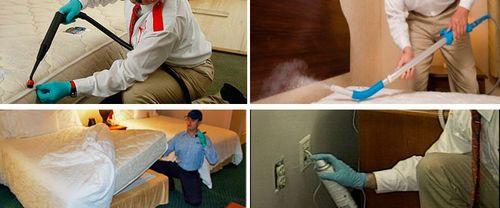Клопы в квартире: причины появления и эффективные средства
