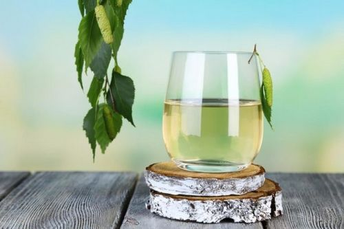 Когда и как собрать берёзовый сок: рекомендации и полезные советы