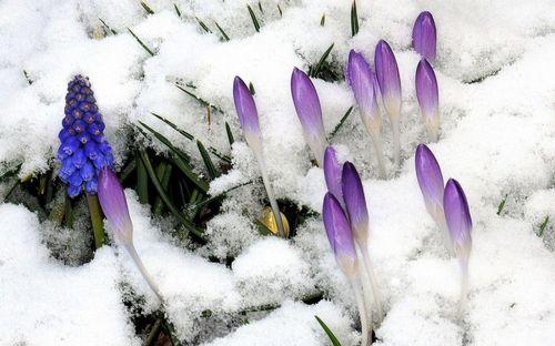 Многолетние цветы для дачи: фото и описания с названиями