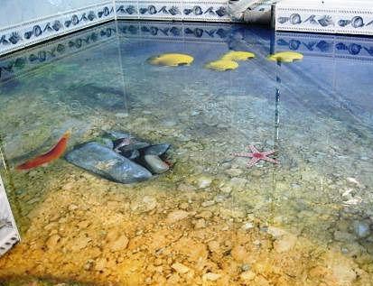Наливные полы 3D: технология, фото, видео