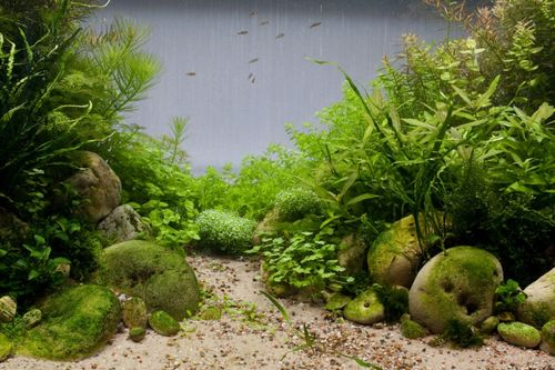 Оформление аквариумов своими руками: фото, видео, примеры