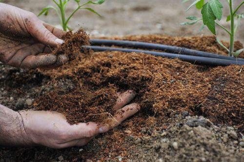 Подкармливаем и растим домашние огурчики и помидорчики