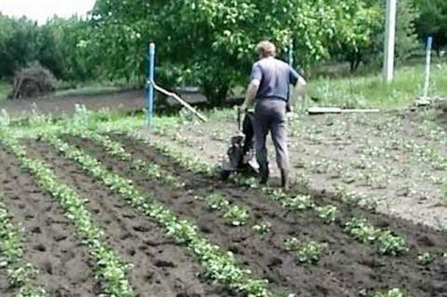 Посадка картофеля мотоблоком с окучником двухрядным: видео