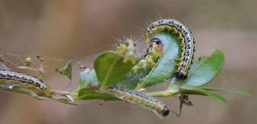 Самшит: размножение, уход, посадка, болезни, стрижка самшита (100 фото) – Кошкин Дом