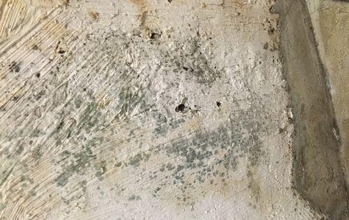 Виды и применение антисептиков для защиты бетона от плесени