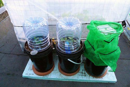 Выращивание огурцов на подоконнике: советы и фото