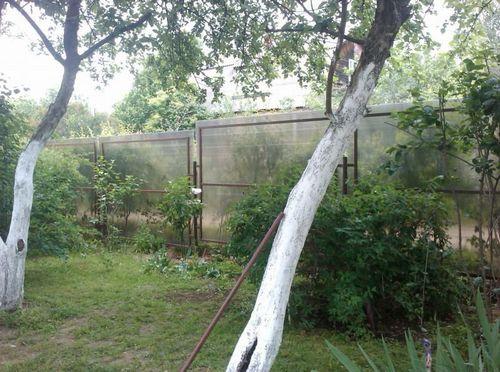 Забор из поликарбоната своими руками: фото, видео инструкция